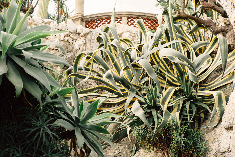 178279bb0aba6c Jardin Exotique – Monaco